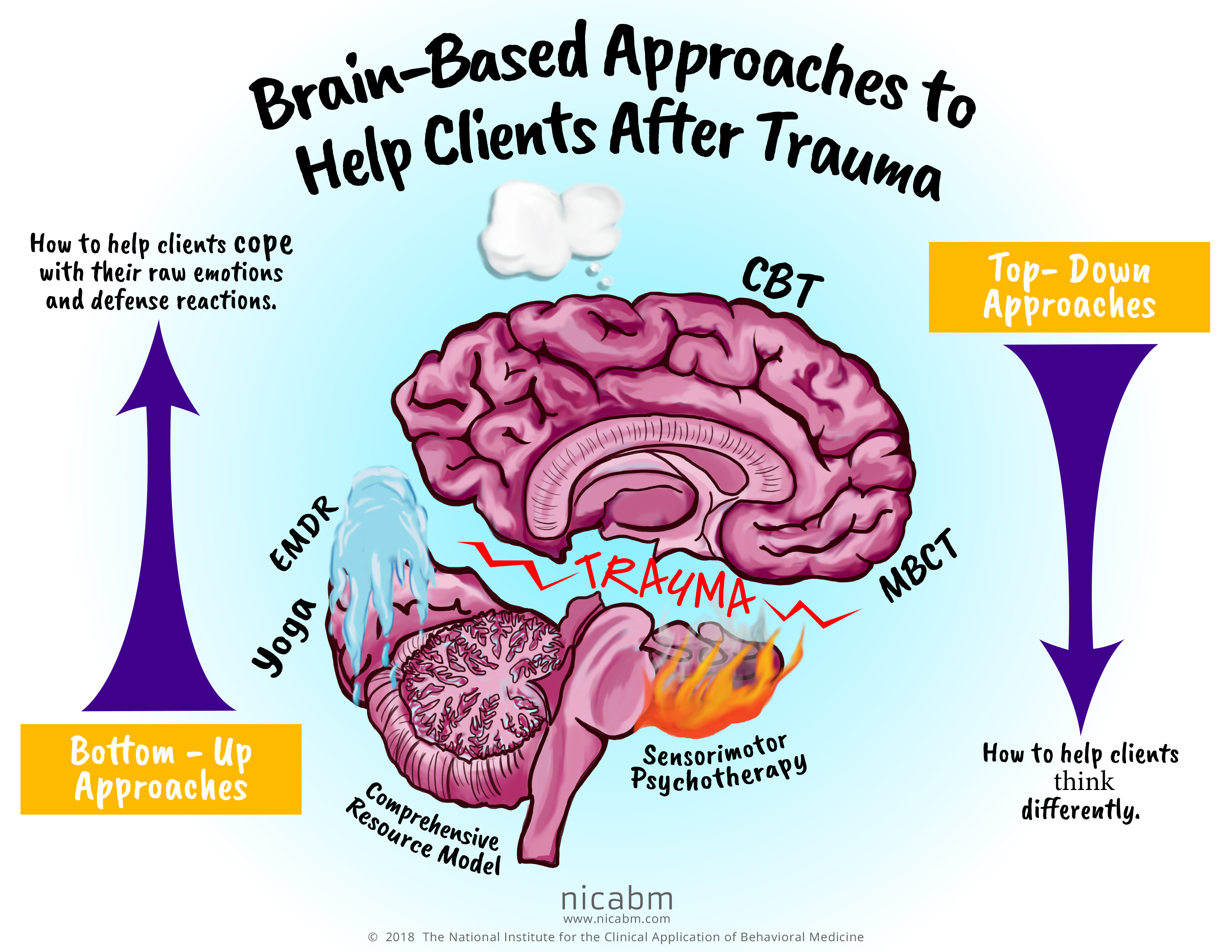 Brain Based Approaches to help Clients After Trauma Infographic