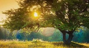 peaceful landscape for mindfulness meditation