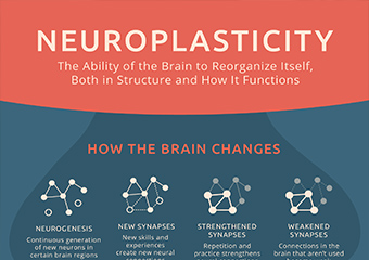 How Does Neuroplasticity Work? [Infographic]